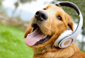 Jazz Cafe | Smooth Jazz to lift your Soul